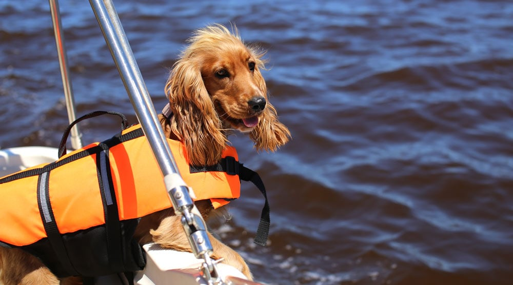 Dog boat ramps and ladders can keep your dog safe. Here are five of the best.