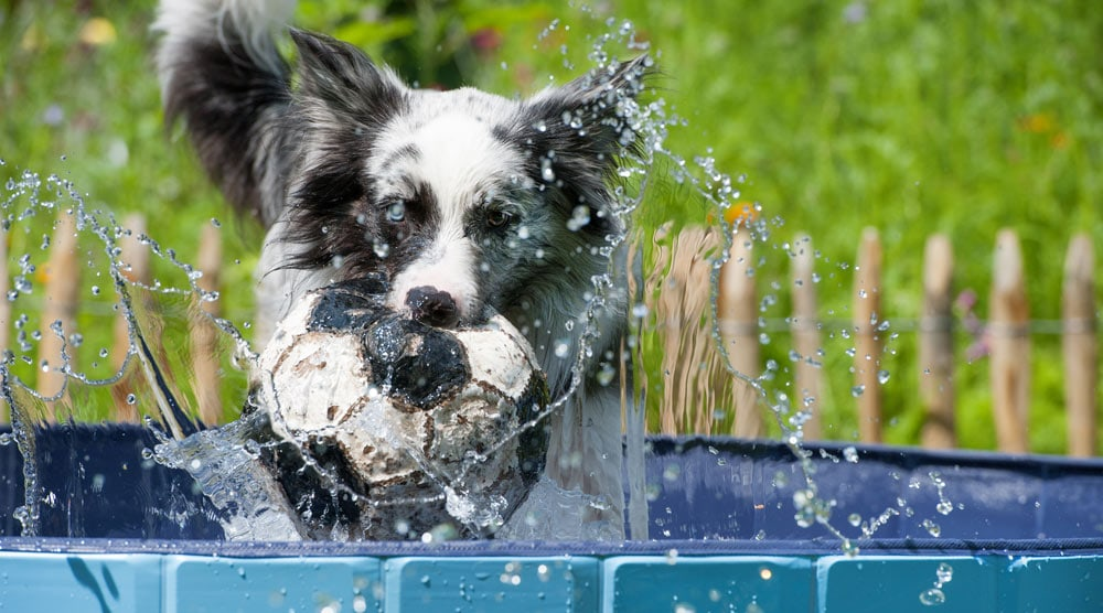 A guide to the best plastic dog pools for your garden
