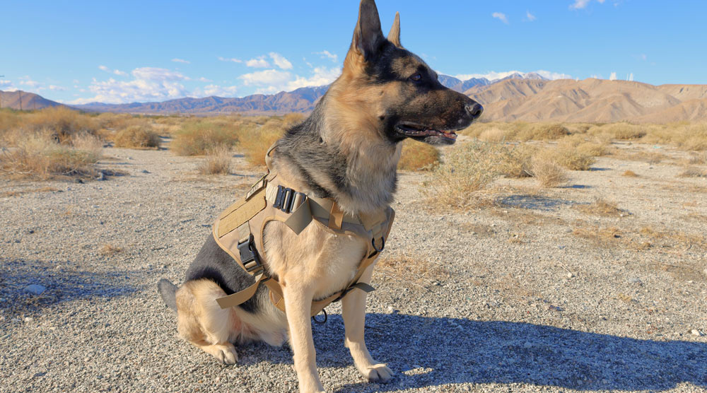 A guide to the best tactical dog bests and harnesses