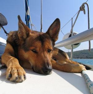 A dog laying on a boat